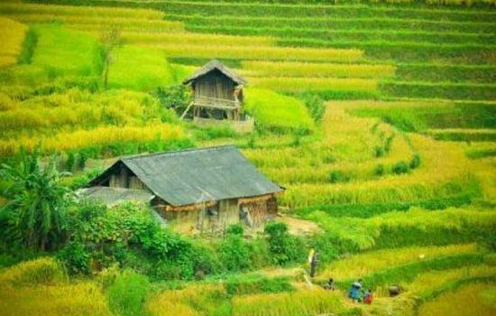 Le village Lim Mong au Vietnam / Rizières en terrasses à Mu Cang Chai / Asie
