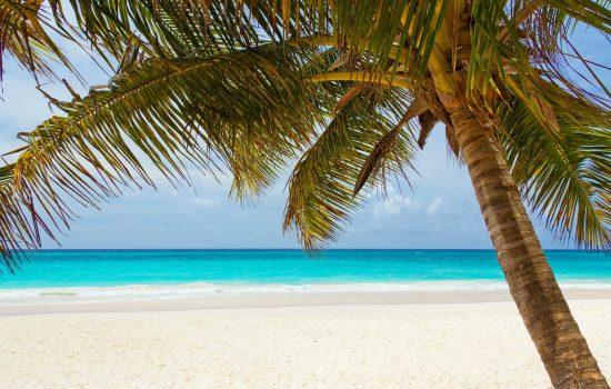Vue de la plage et palmier