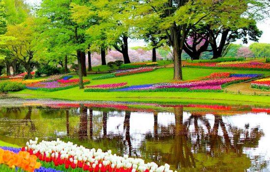 Keukenhof, le parc floral aux Pays-Bas